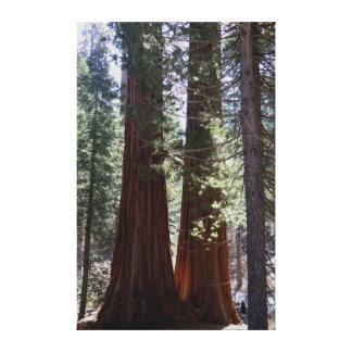 Giant Sequoias wrapped canvas print