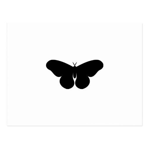Giant Silkworm Moth Post Card