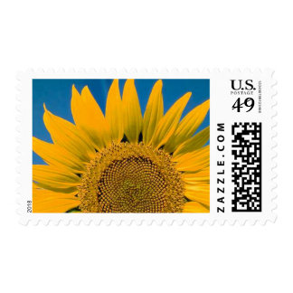Giant Sunflower Stamps