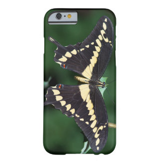 Giant Swallowtail Butterfly Barely There iPhone 6 Case
