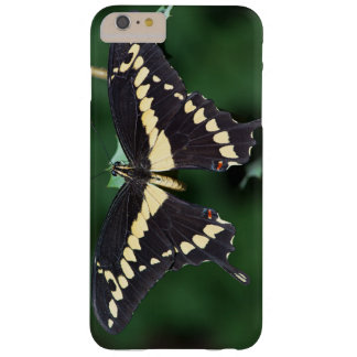 Giant Swallowtail Butterfly Barely There iPhone 6 Plus Case