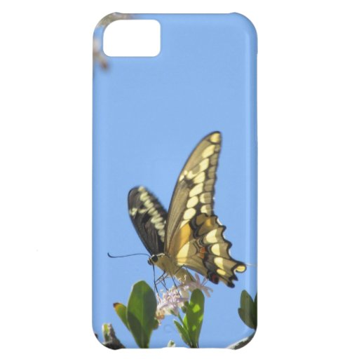 Giant Swallowtail Butterfly Case For iPhone 5C