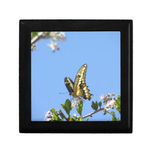 Giant Swallowtail Butterfly Jewelry Boxes