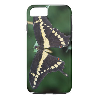 Giant Swallowtail Butterfly iPhone 8/7 Case