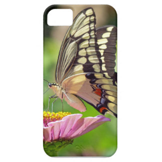 Giant Swallowtail Butterfly iPhone SE/5/5s Case
