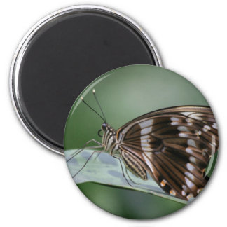 Giant Swallowtail Butterfly Magnet Magnets