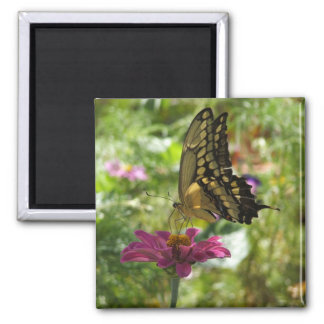 Giant Swallowtail Butterfly Magnet
