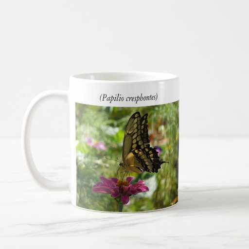 Giant Swallowtail Butterfly Coffee Mugs