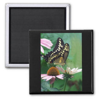 Giant Swallowtail Butterfly on Flowers 2 Inch Square Magnet