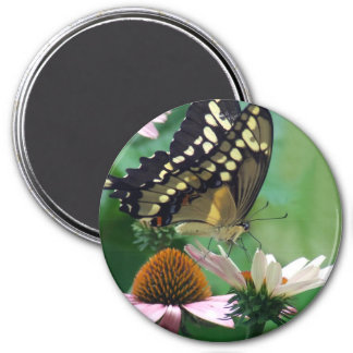 Giant Swallowtail Butterfly on Flowers 3 Inch Round Magnet