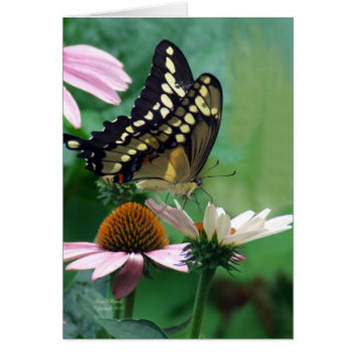 Giant Swallowtail Butterfly on Flowers Card