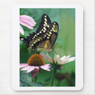 Giant Swallowtail Butterfly on Flowers Mouse Pad