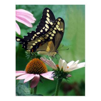 Giant Swallowtail Butterfly on Flowers Postcard