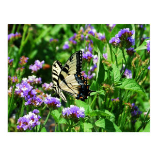 Giant Swallowtail Butterfly on Purple Statice Postcard