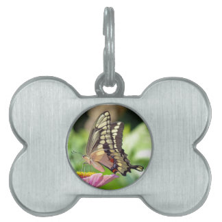 Giant Swallowtail Butterfly Pet Tag