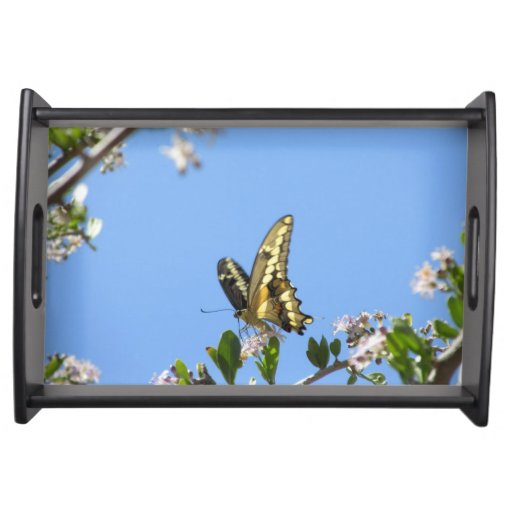 Giant Swallowtail Butterfly Food Trays
