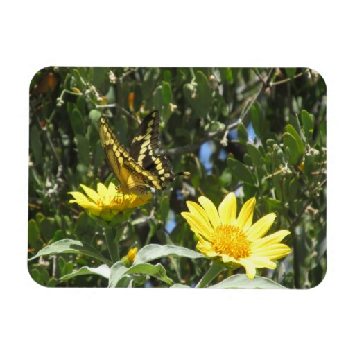 Giant Swallowtail Butterfly Vinyl Magnet