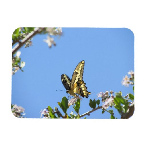 Giant Swallowtail Butterfly Flexible Magnets