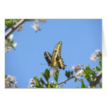 Giant Swallowtail Butterfly Stationery Note Card