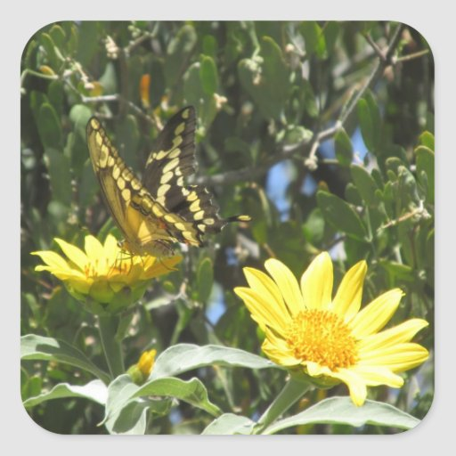 Giant Swallowtail Butterfly Square Stickers