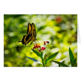 Giant Swallowtail Cards