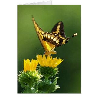 Giant Swallowtail Card