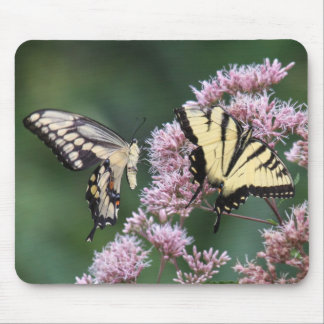 Giant Swallowtail & Eastern Tiger Swallowtail Mouse Pad