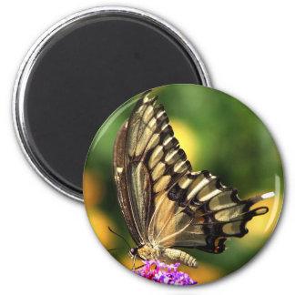 Giant Swallowtail Magnet