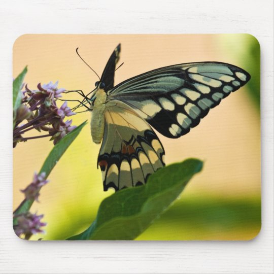Giant Swallowtail Moth Mouse Pad