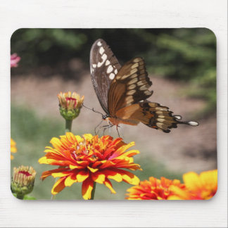 Giant Swallowtail Mouse Pad