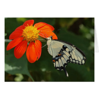 Giant swallowtail on flower card