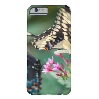 Giant Swallowtail Papilio Cresphontes Barely There iPhone 6 Case