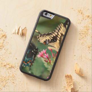 Giant Swallowtail Papilio Cresphontes Carved Maple iPhone 6 Bumper Case