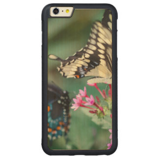 Giant Swallowtail Papilio Cresphontes Carved Maple iPhone 6 Plus Bumper Case