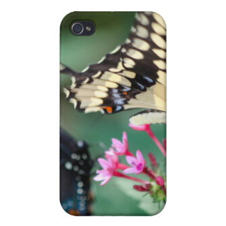 Giant Swallowtail Papilio Cresphontes iPhone 4/4S Case