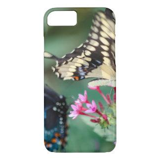 Giant Swallowtail Papilio Cresphontes iPhone 8/7 Case