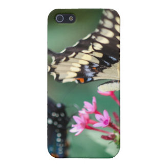 Giant Swallowtail Papilio Cresphontes iPhone SE/5/5s Case