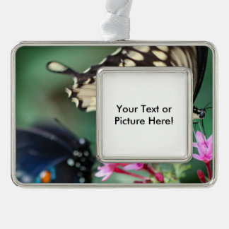 Giant Swallowtail Papilio Cresphontes Silver Plated Framed Ornament