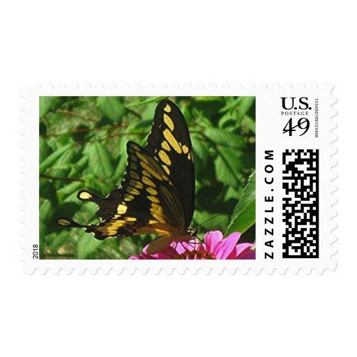 GIANT SWALLOWTAIL postage