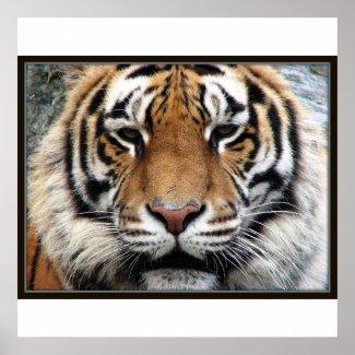 Giant Tiger Print print