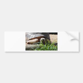 Giant Tortoise Bumper Sticker