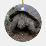 Giant tortoise Galapagos Islands Ceramic Ornament