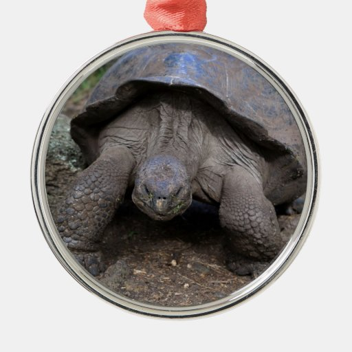 Giant tortoise Galapagos Islands Ornament