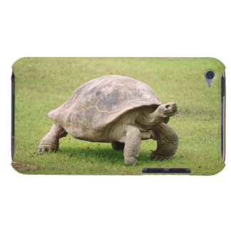 Giant Tortoise walking on grass iPod Touch Case-Mate Case