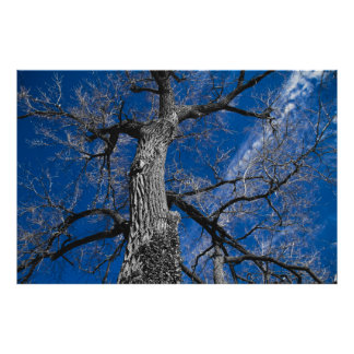 Giant Tree Poster