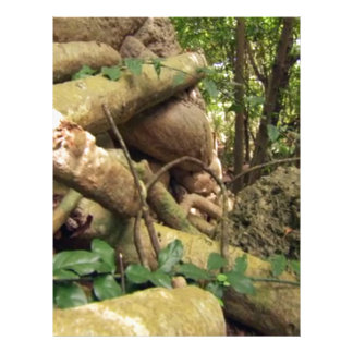 Giant Tree Roots Trip to Zanzibar Island Reefs Fun Letterhead