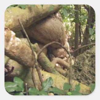 Giant Tree Roots Trip to Zanzibar Island Reefs Fun Square Sticker