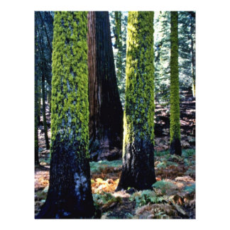 Giant Trees - Sequoia National Forest Personalized Flyer
