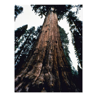 Giant Trees - Sequoia National Park Flyer