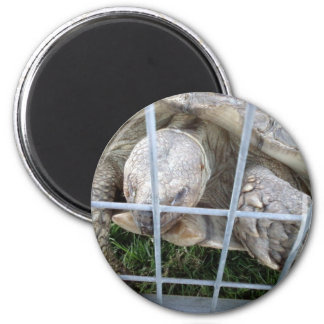 Giant Turtle 2 Inch Round Magnet